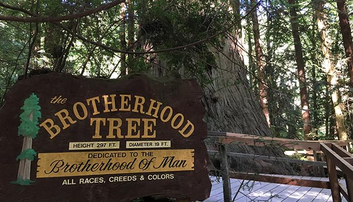 The Brotherhood Tree